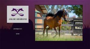 Jakar Arabians