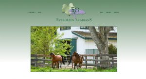 Evergreen Arabians