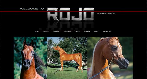 Rojo Arabians