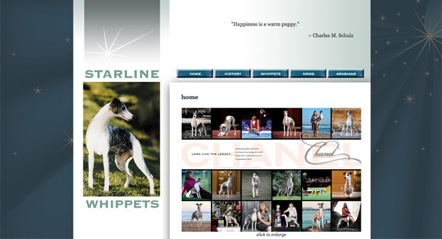 Starline Whippets